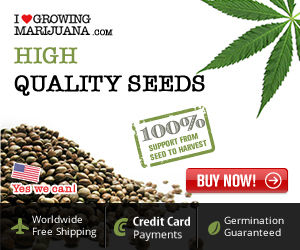 Boost weed strain