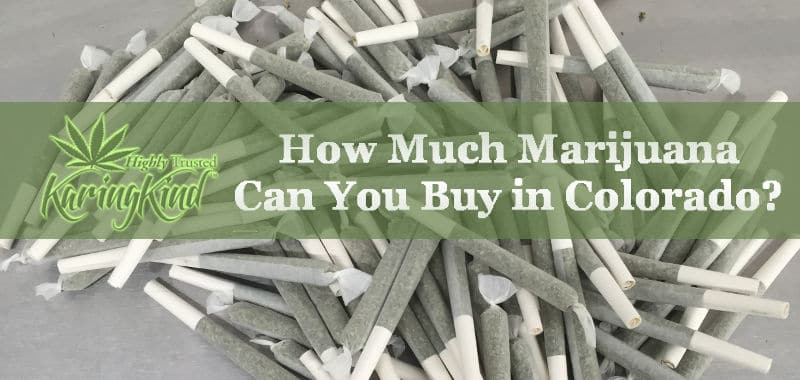 How much pot can i buy in colorado