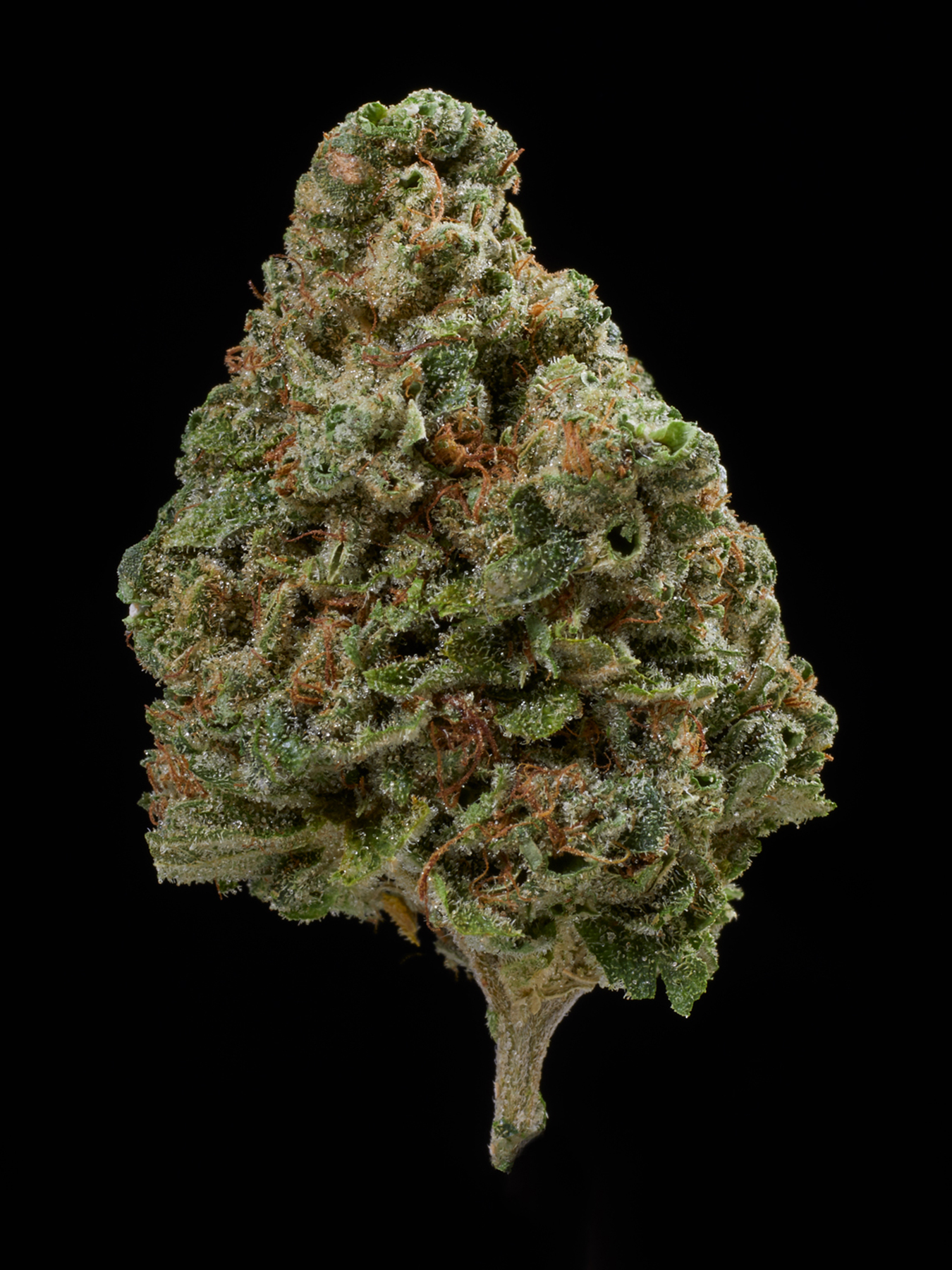 Exotic weed pictures