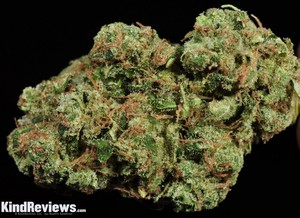 Sour diesel weed pictures