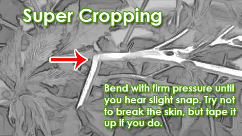 Super cropping techniques