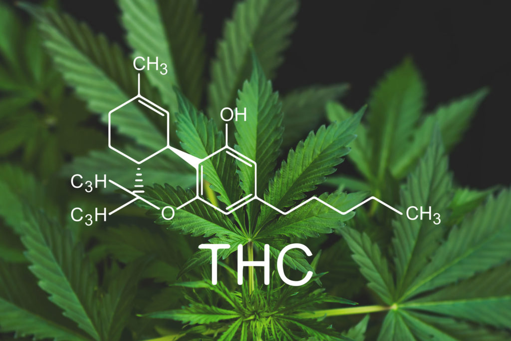 Does water clean thc from your system