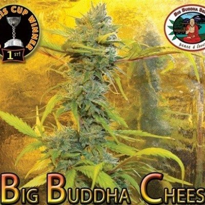 Marijuana strain cheese