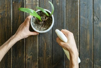 How to get rid of gnats in plants naturally