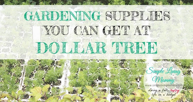 Dollar store potting soil