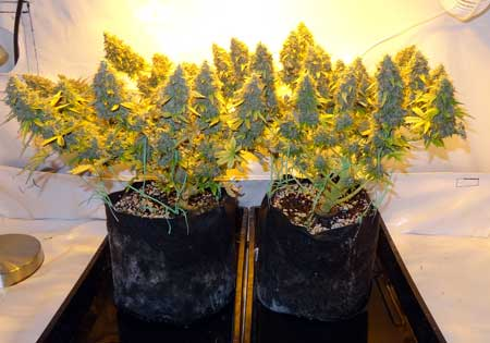 How to lower temperature in grow tent