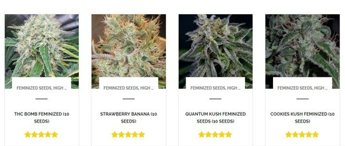 Dutch seed shop review