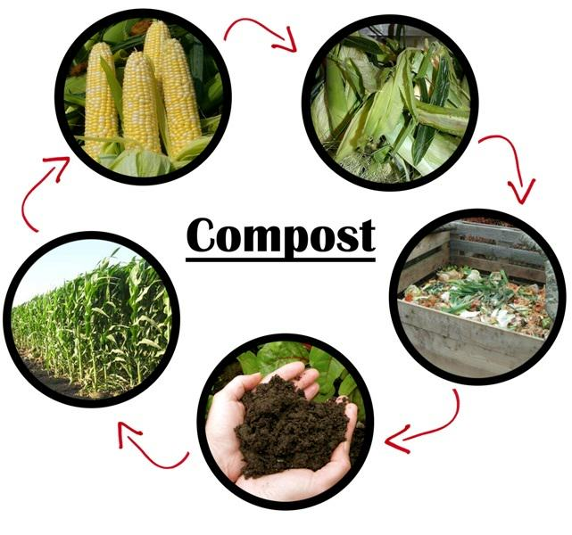 Best compost for cannabis