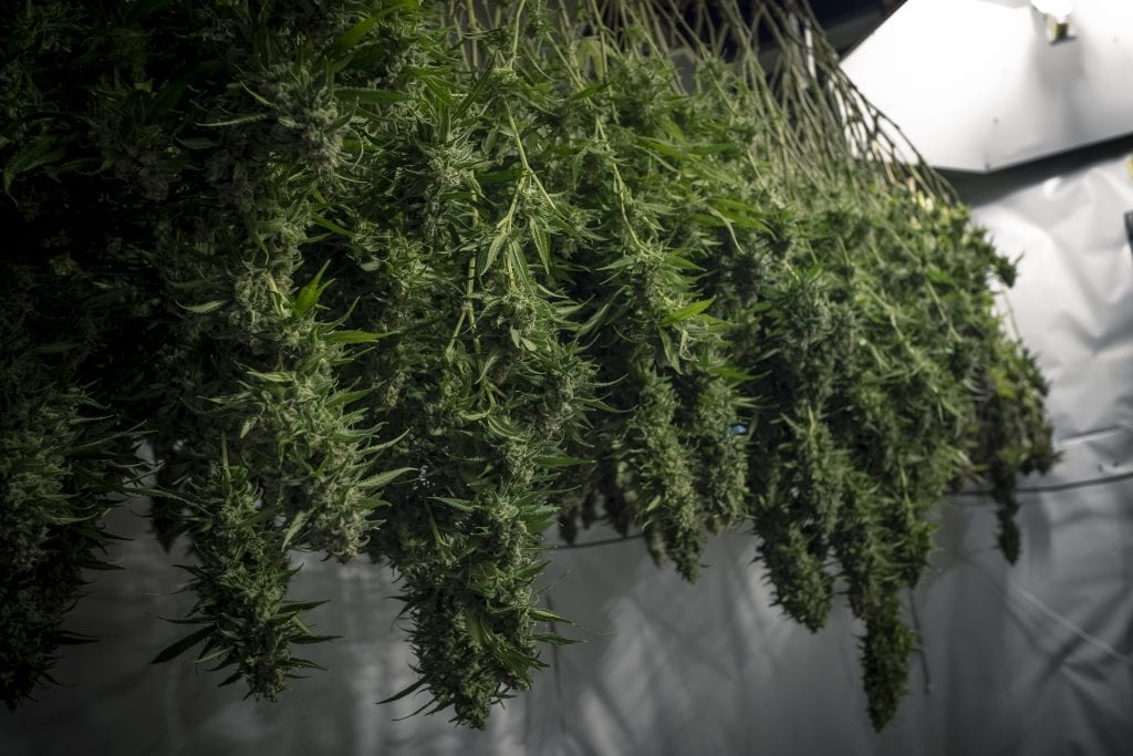 Fast way to dry weed
