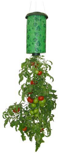Can you grow weed upside down