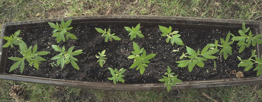 Best potting soil for weed indoors