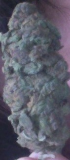 Sour purp weed